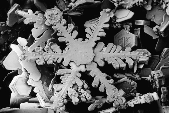 Snowflake_magnified_usda